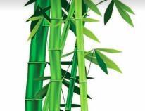 Tanya Keam Wellness - Acupuncture & Natural Health