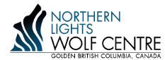 Northern Lights Wildlife