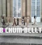 Hundeschule Bochum Bellt
