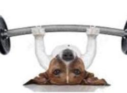 Hunde-Gym