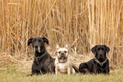 Helden an der Leine – Hundezentrum Oberbayern in Neuried bei München