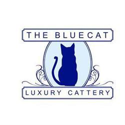 The Bluecat Cattery Ltd