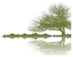 Ancestry Focus