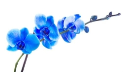 Orchid Rehabilitation Ltd