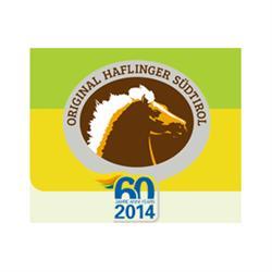 Haflinger Sudtirol