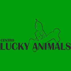 Centro Lucky Animals